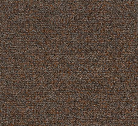 Orange Iris 981581 51